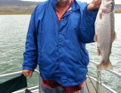 Another Panguitch Lake Trout